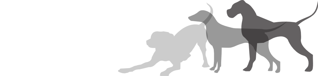 Animag